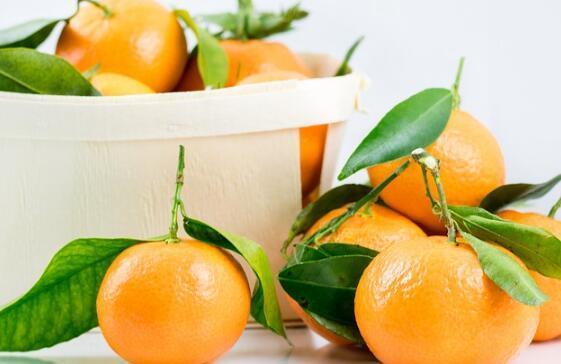 柑橘类水果的功效与作用