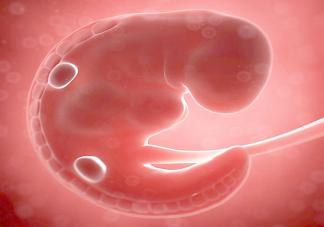 转胎丸是什么 转胎丸有什么危害