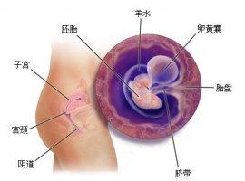 怀孕1一9月肚子变化图